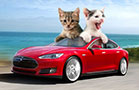 Introducing Pet-Driving Cars From Elon Musk's Tesla Motors