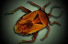 Bedbugs Can Carry MRSA Superbug