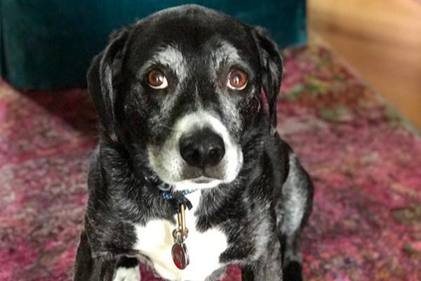 Renaming A Rescue Dog