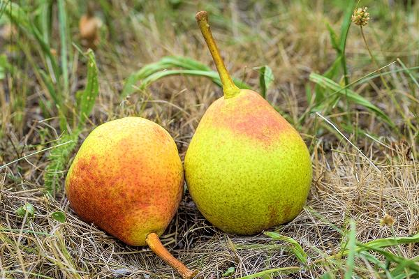 Fruitarianism