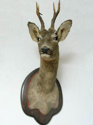 <b>Game and Hunting Trophies</b>