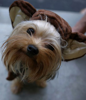 Pet Personalities on Halloween : monkey dog costumes  - Germanpascual.Com