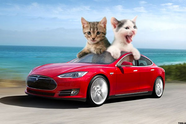 Introducing Pet Driving Cars From Elon Musk S Tesla Motors