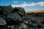 Venture Capitalists, Check Out Coal, Gold and Shipping Stocks