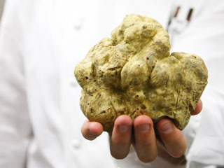 Best Place to Dig Up Truffle Treasures This Fall