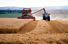 Biofuels Will Not Solve 2014 Grain Glut