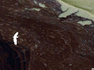 BP Oil Spill Fuels Government Contracting