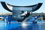 False Advertising Lawsuit Against SeaWorld Moves Forward