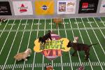Move Over, Seahawks and Broncos! It's Puppy Bowl Time