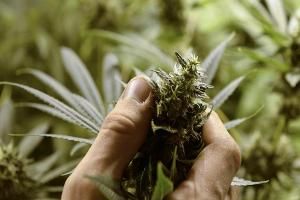 Jim Cramer: Pot Boom Bullish for Scott's Miracle-Gro