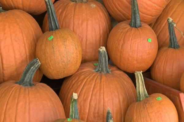 If You Love Pumpkin Spice, Try These 5 Surprising Products