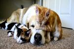 Puppies! Kittens! Pet Vitamin Sales Boom as Insurance Costs Skyrocket