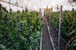Jim Cramer Recommends Canopy Growth