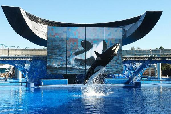 More Declines for SeaWorld