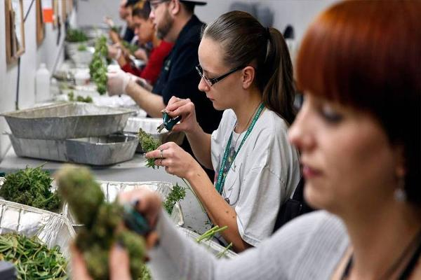 Want to Invest in Cannabis? There's a Seminar for That