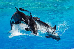 SeaWorld Will 'Reposition from Animal Entertainment,' CEO Manby Said