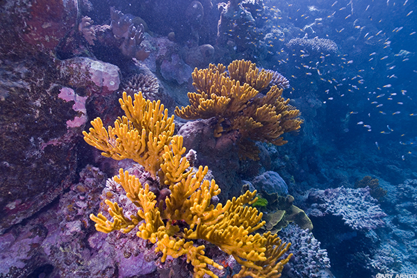 9. The Great Barrier Reef