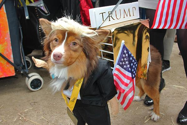 17 Adorable Dog Costumes From Donald Trump to the Real Dracula & 17 Adorable Dog Costumes From Donald Trump to the Real Dracula ...