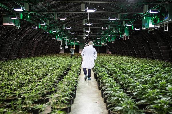 Canopy Growth Makes $3.4 Billion Play for U.S Cannabis Group Acreage Holdings