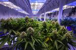 How the Cannabis Tech Company Akerna Is Changing the Industry
