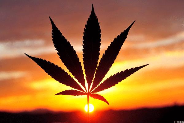 Tilray Is Smokin As Companies Circle Cannabis Stocks Thestreet