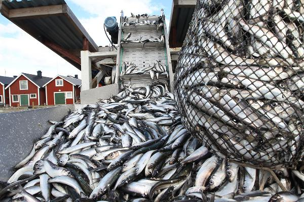 Risks to Fisheries