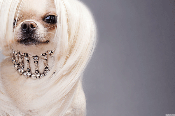 10 Ridiculous Yet Amazing Luxury Products for Dogs