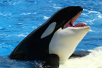 SeaWorld Stock Tumbling as Citi Cuts to 'Sell'