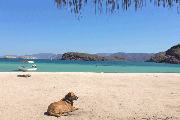 How Americans And Canadians Enjoy Surprising Scenic Baja California Mexico