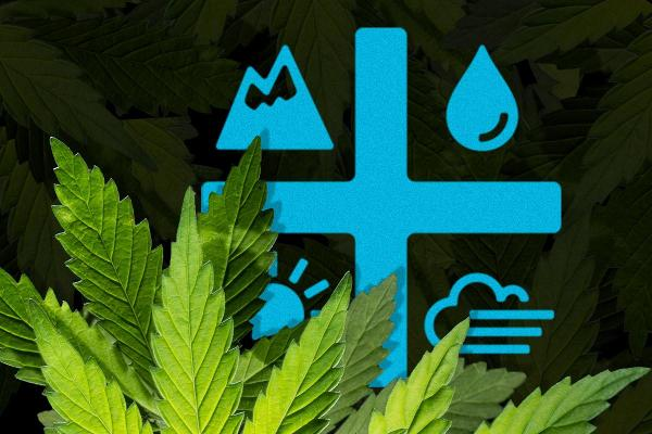 When the Smoke Clears, Aurora Cannabis Should Survive 2020