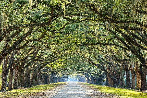 The Deep South: Charleston to New Orleans
