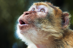 Rhesus Monkeys in Florida Could Spread Killer Herpes Virus to Humans