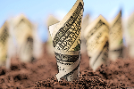 For Dividend Funds and ETFs, Look to 'Growth'