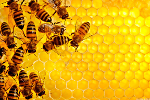 Monsanto's Round Up Weed Killer Is Helping Kill Bees: LIVE MARKETS BLOG