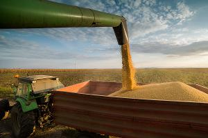 How Soybean Markets Responded to Trade War News