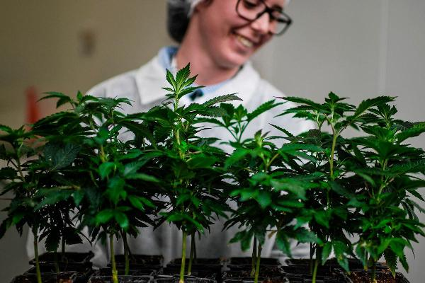 Pot Stocks Soar After Aphria Posts Second Straight Quarterly Profit