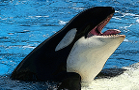 SeaWorld Has Made a Major Upside Breakout; a Quantitative Buy Signal Is Icing