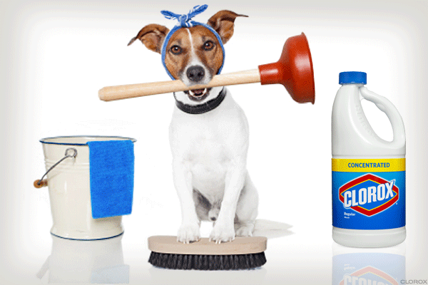 Toilet Bowl Cleaners Explain Everything About Clorox's Stunning Fourth Quarter