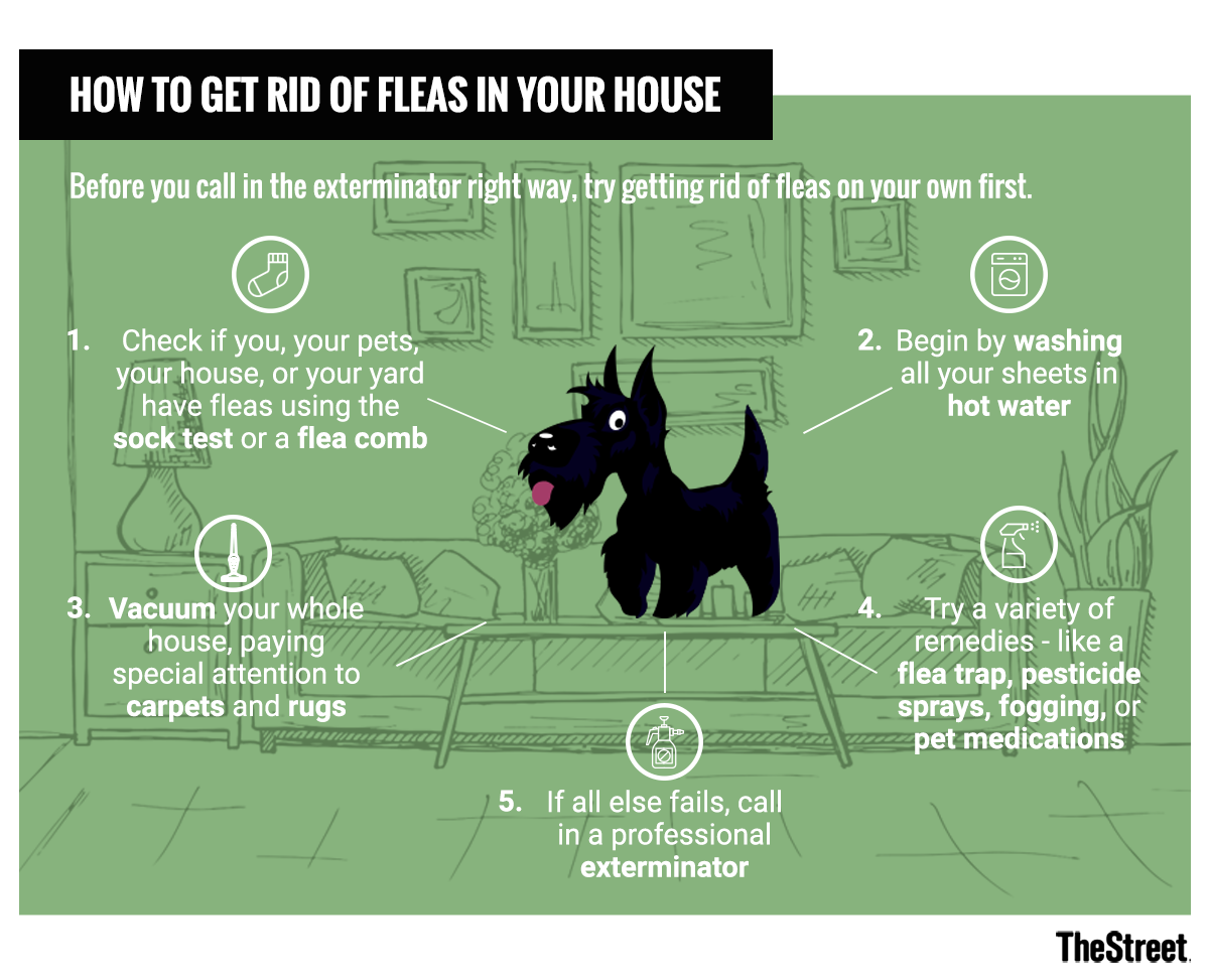How to get rid of dog fleas in your house