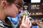Cannabis Shoppers Prefer the In-Store Experience