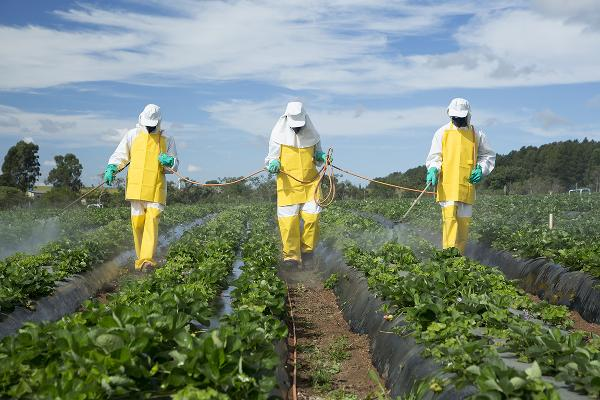 Fruits and Vegetables With the Most Pesticide Residue