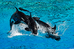 SeaWorld Makes a Splash as Hill Path Capital Raises Stake
