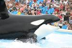 SeaWorld Shares Swept Away, Credit Downgrade in Play