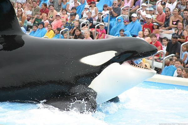 SeaWorld Shares Pop as Shareholders Reportedly Oust Chairman