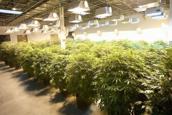 3 Marijuana Stocks That Could Triple From Legalized Pot