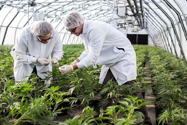 These Are the 'QuickBooks' of the Cannabis Business