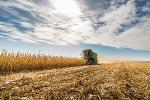 How Grain Futures Revolutionized Finance