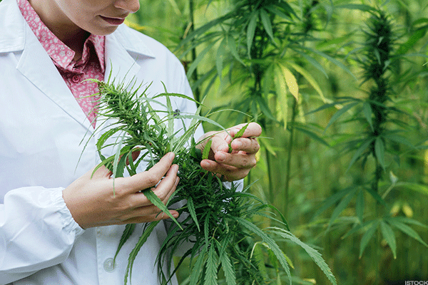 Collect Smokin' Hot Profits From This Marijuana Biotech