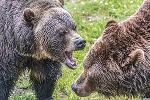 Today's Bears Are the Dumb Money; Ride the Rally With These 3 ETFs