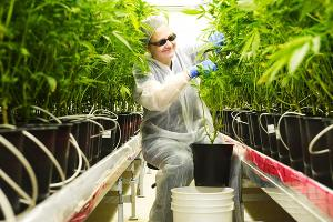 Cannabis Stocks Fall: Tilray Up 10.4%; General Cannabis Off 5.3%